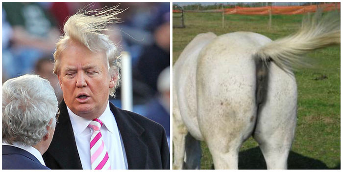 Donald Trump Parecidos Razonables Cola Caballo