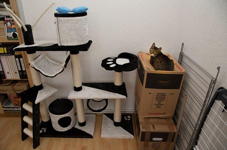 Lógica de gatos 004