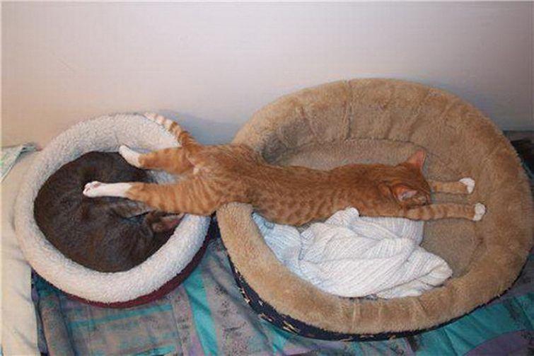 Lógica de gatos 012