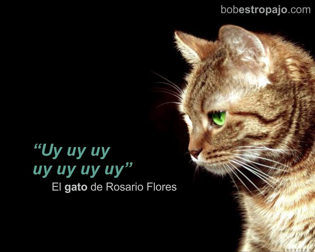 Citas Célebres El Gato De Rosario Flores Bobweb