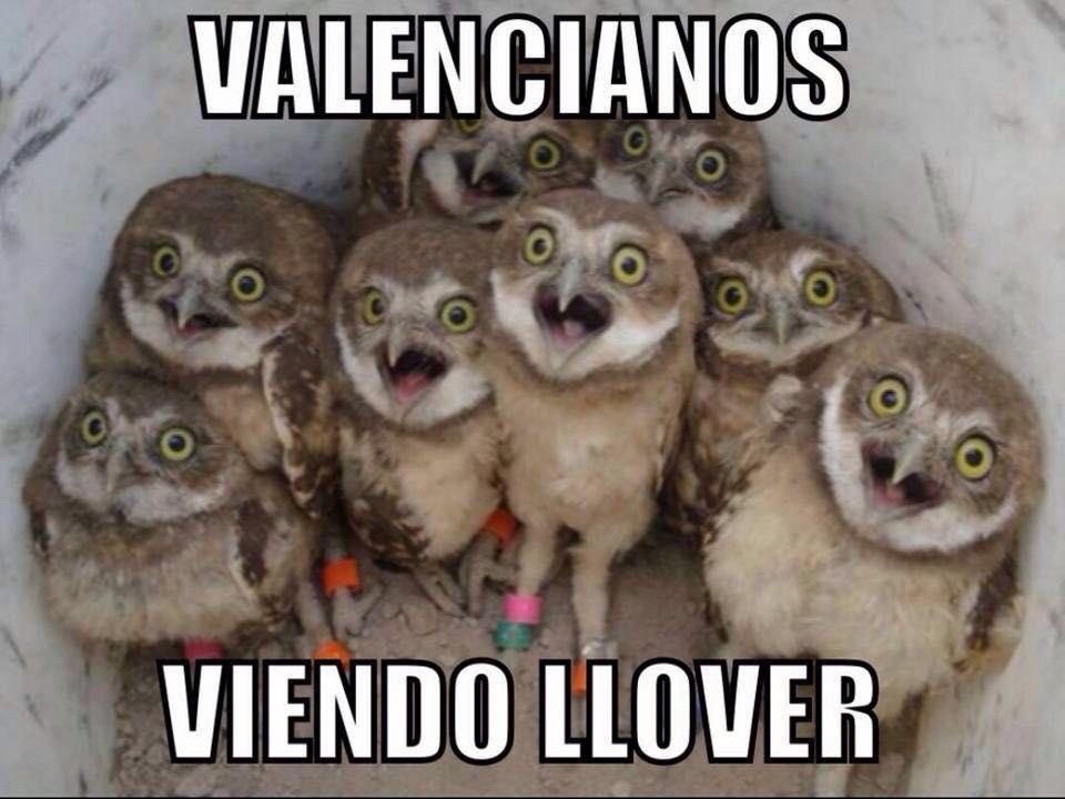 valencianos-viendo-llover