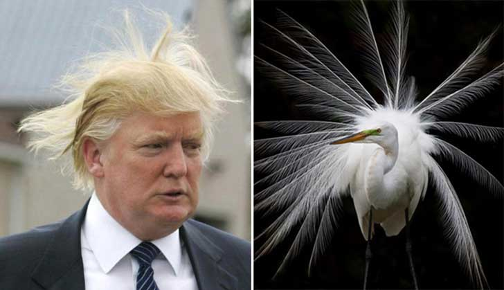 Donald Trump Parecidos Razonables Egret