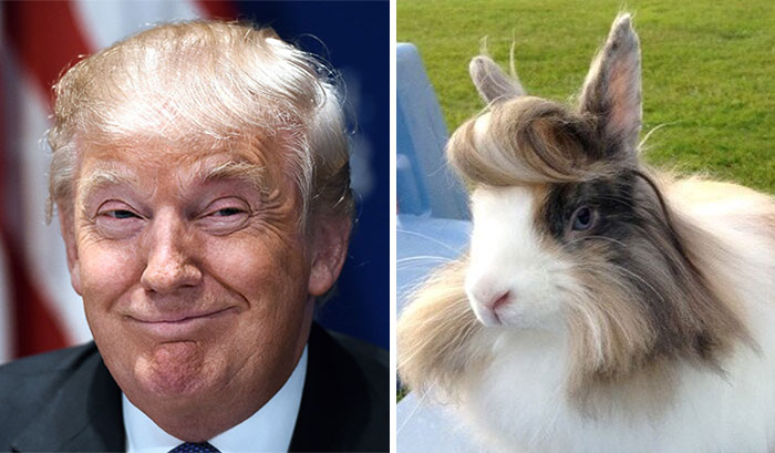 Donald Trump Parecidos Razonables Conejillo India