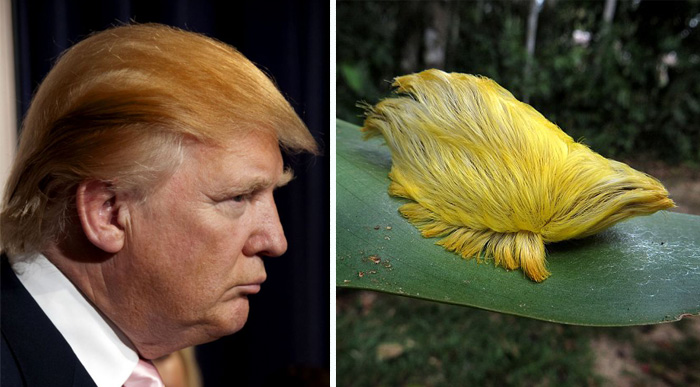 Donald Trump Parecidos Razonables animalillo