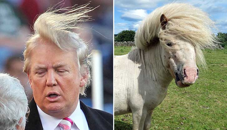 Donald Trump Parecidos Razonables Pony