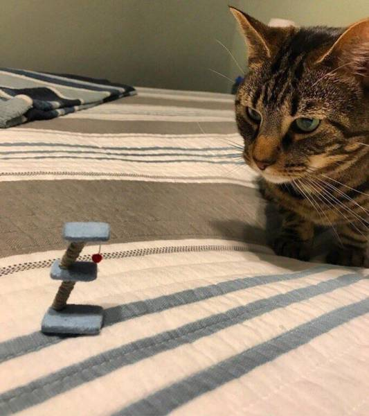 Gatito mirando juego pequeño