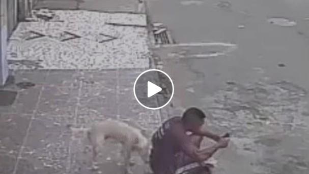 Perro orinando en un hombre sentado en la calle