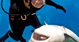 Buceador rascando a un tiburón